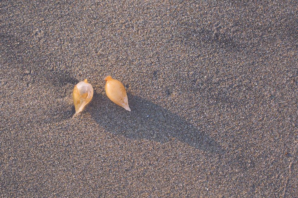 Corona Del Mar seaweed