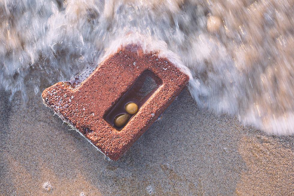 Seaweek inside a brick