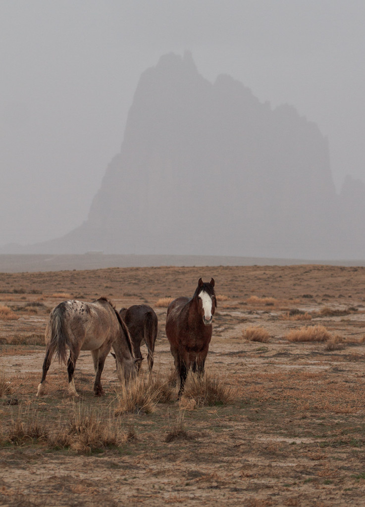 Horses in the rain near Shiprock, NM
