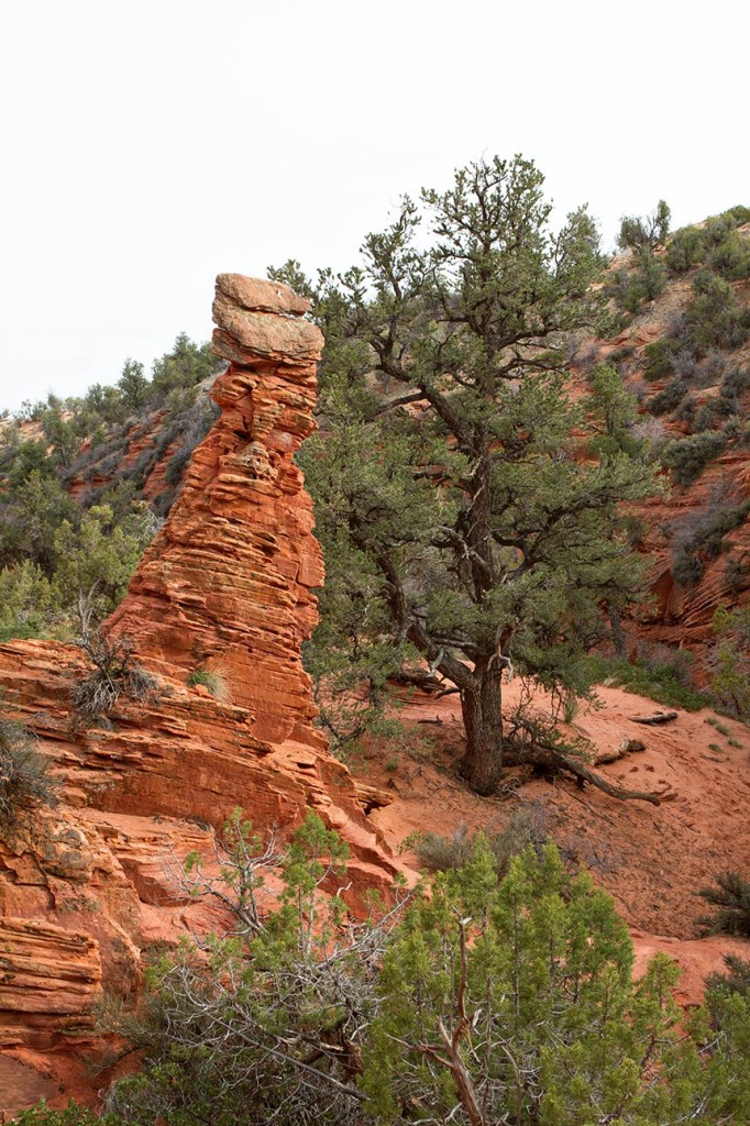 A hoodoo in Mystery Canyon near Kanab, Utah