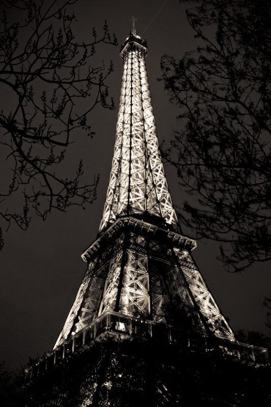 Eiffel Tower through the trees at night