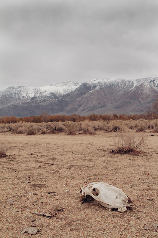 Jake Reinig Travel Photography Lone Pine Cattle Livestock Graveyard
