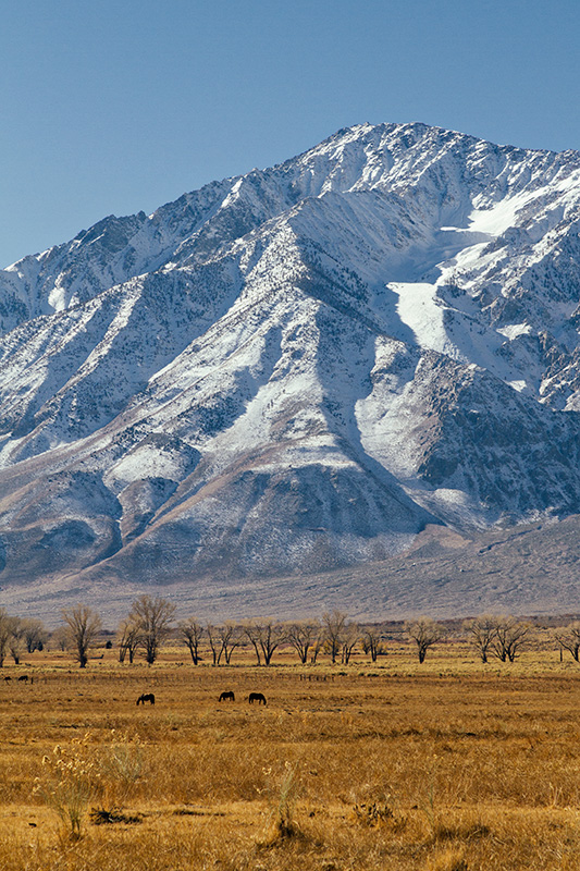 Jake Reinig Travel Photography | Cattle & Horses Grazing Near Bishop