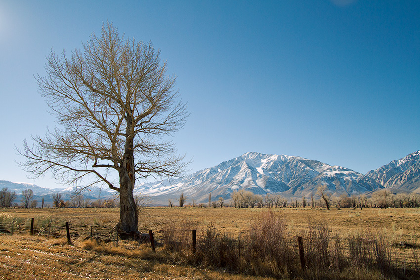 Jake Reinig Travel Photography | Landscape of a Tree Near Bishop