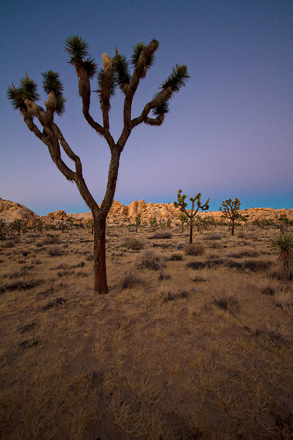 Sunset at Joshua Tree near Barker Dam