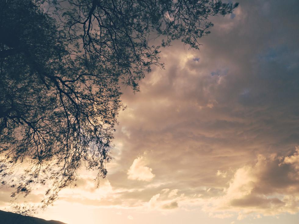 Sunset under the tree of forgetfullness