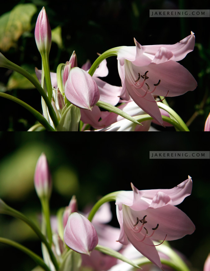 The top picture is f/16, while the bottom is f/2.8. Notice the large shift in depth of field.